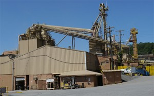 PPCO Plant Picture